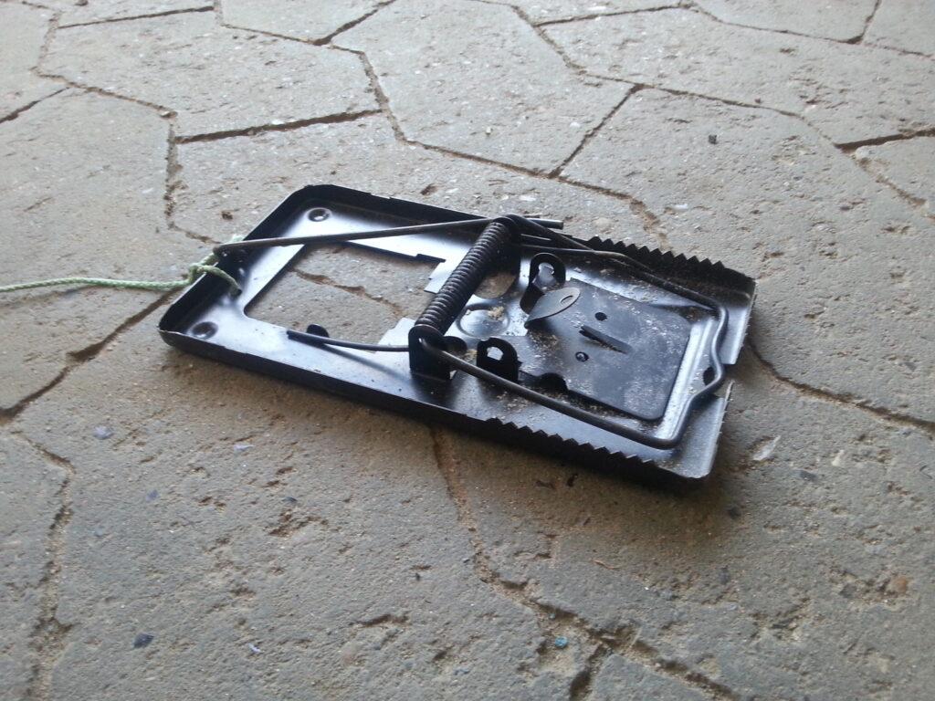 Bekæmpelse af rotter med fælder hos Kloak Ekspressen ApS